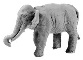 Indian Elephant (Bare) (2)