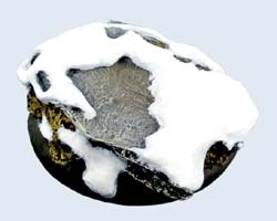 Winter Shale Bases, WRound 50mm (1)