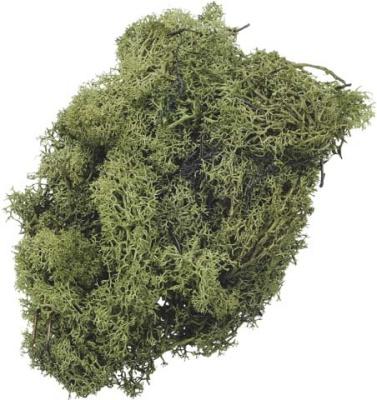 Islandmoos 50g grün