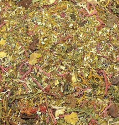 Ground Detail - Autumn Forest