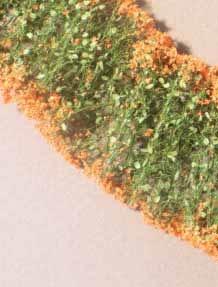 Blumen (orange)