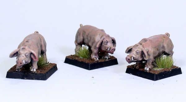 Pigs (3)