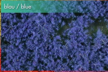 Bodendecker, blau
