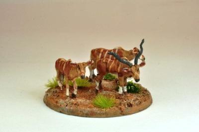 Kudu (5)