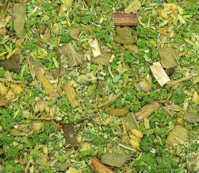 Ground Detail - Green Forest