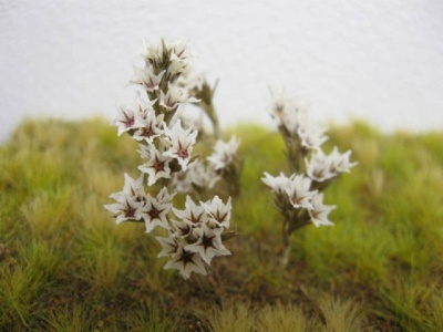 Small White / Red Natural Flowers