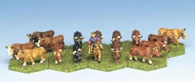 Bull Herd (16)