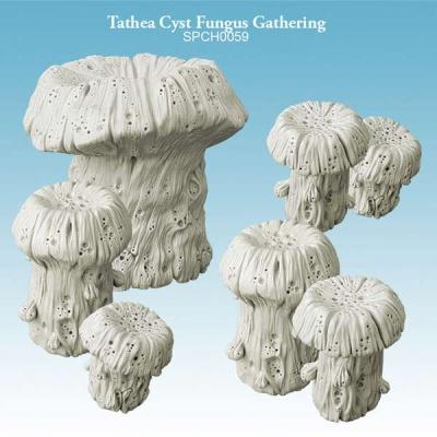 Tathea Cyst Fungus Gathering