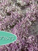 Blütenbüschel (Frühherbst)