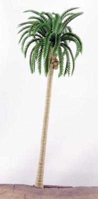 Palmen 15cm (10)