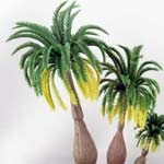 Palmen und Bäume