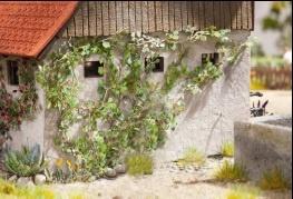 Wilder Wein, 12, Pflanzen