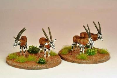 Oryx (5)