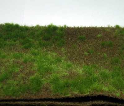 Waldboden bewachsen (Sommer)