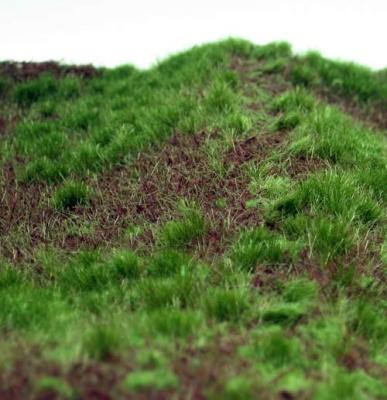 Waldboden bewachsen (Frühherbst)