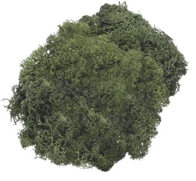 Islandmoos 50g tannengrün
