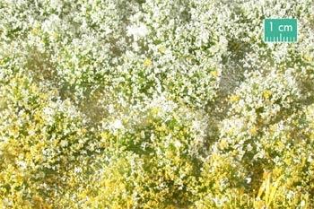 Blütenbüschel (Frühling)