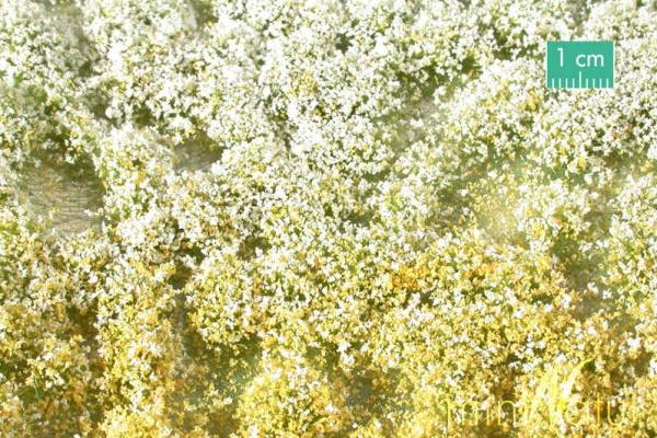 Blütenbüschel Frühling