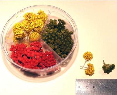 Natural Flower Bushes - 3 types