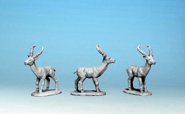Antelope (5)