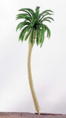 Palmen 12cm (10)
