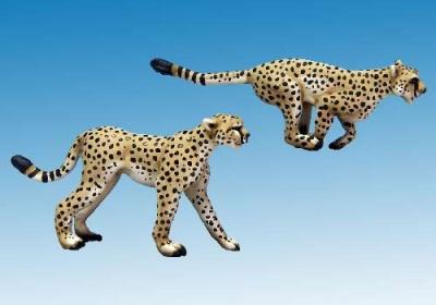 Cheetahs (2)