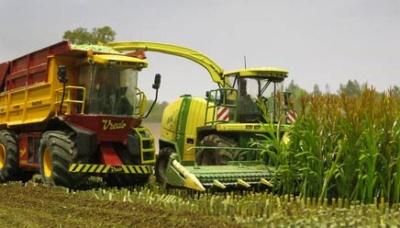 1:32 Maispflanzen (grün, 50 Stk)