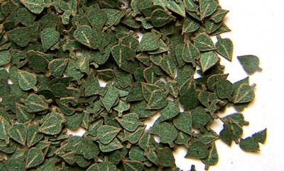 Laub: Birkenblätter grün (1:35)