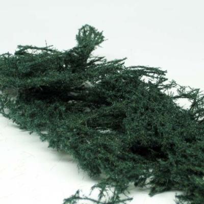Bodendecker immergrün (dunkel)