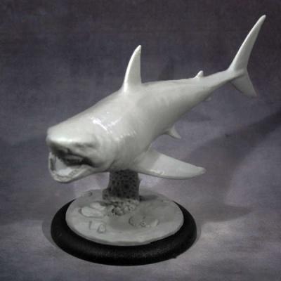 Gray Pointer Shark