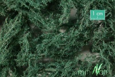 Bodendecker immergrün (dunkel) BOX
